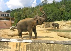 zoo_praga
