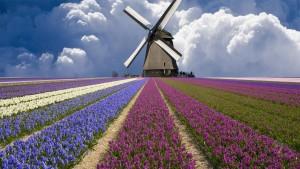 mill_tulips_clouds_field_netherlands_flowers_2560x1440_hd-wallpaper-349395